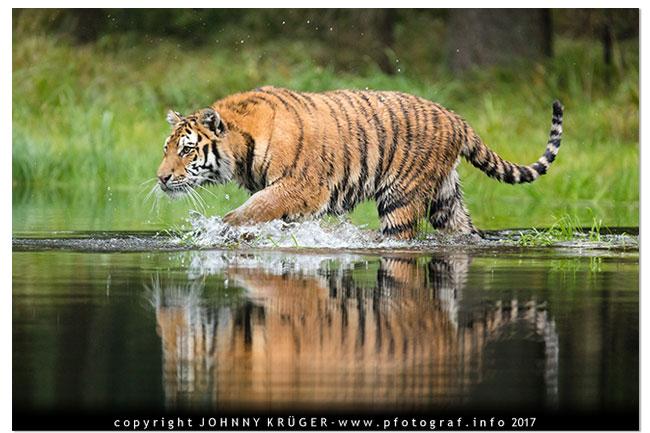 Letztes Shooting mit Tiger Hurikan