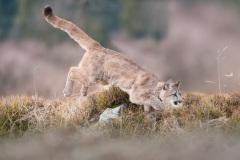 Puma-Sprung_1