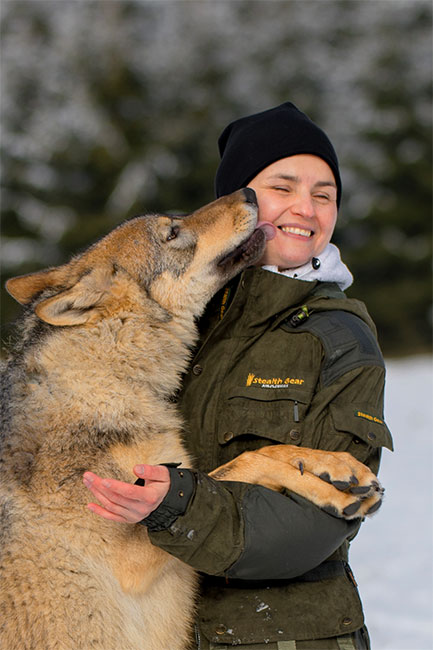 Eurasicher Wolf - Canon EOS 5D mk4 - Sigma 120-300mm F2,8 DG OS HSM | Sports 15