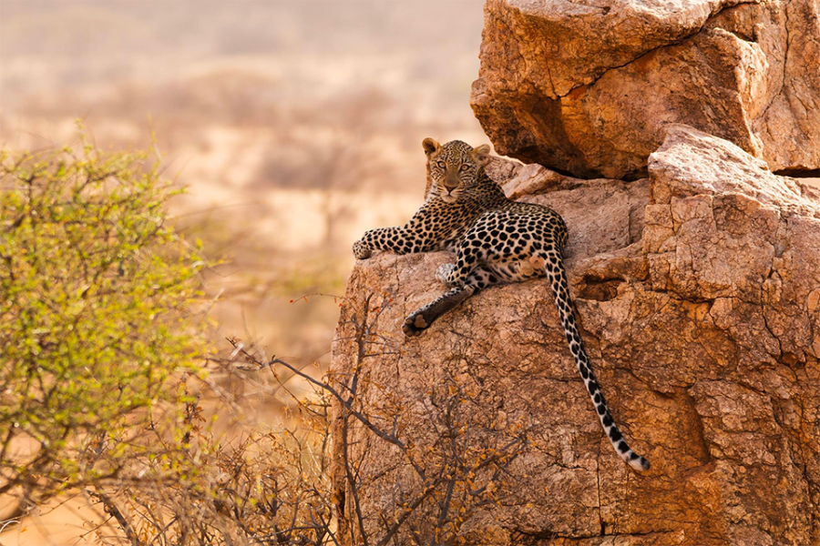 Leopard-Manuel_Ketterer