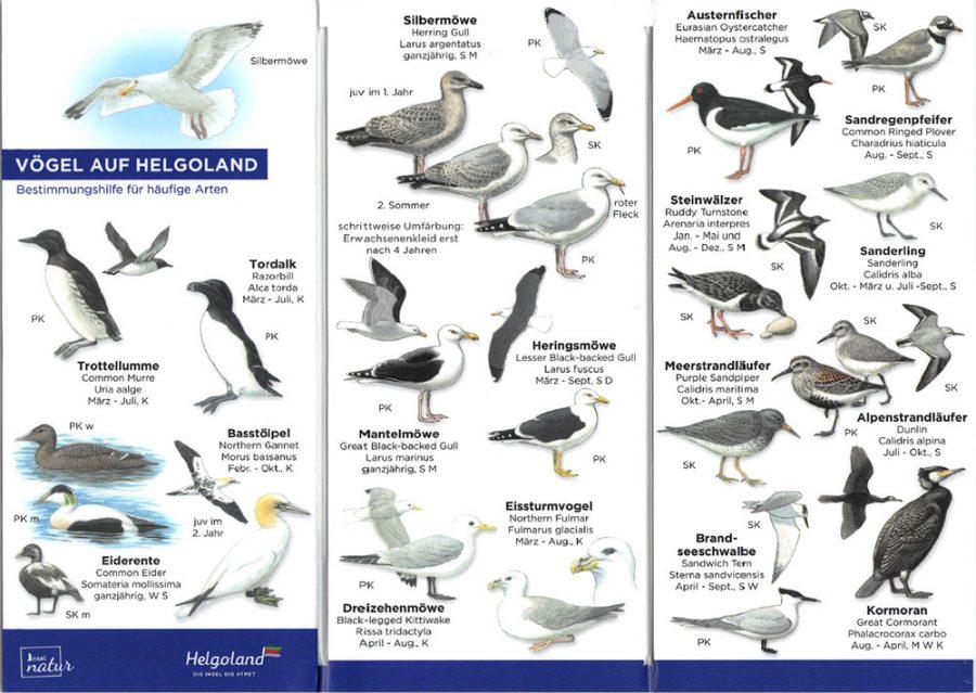 vogelkarte-helgoland-2