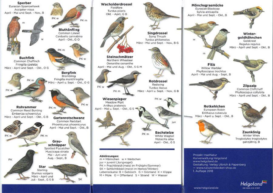 vogelkarte-helgoland-3