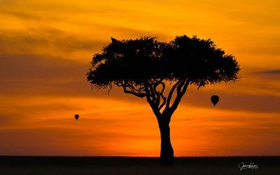 KENIA Safari 2020 – Samburu-Solio-Nakuro-Masai Mara